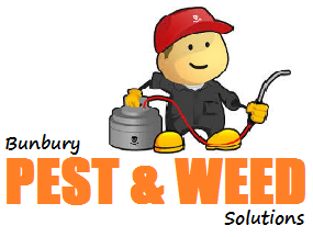 company for  pest control in Bunbury incl. flea spray, spider spray, white ant and termite inspections