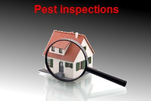 pest inspections bunbury pest control