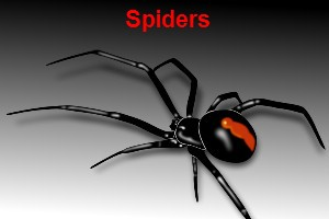 spider spray bunbury pest control