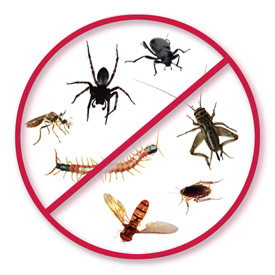 General pest control bunbury , Busselton and collie areas including commercial pest control and residential pest control services Bunbury